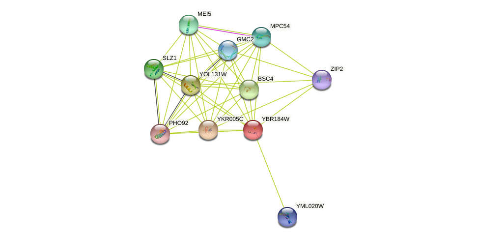 YBR184W protein (Saccharomyces cerevisiae) - STRING interaction network