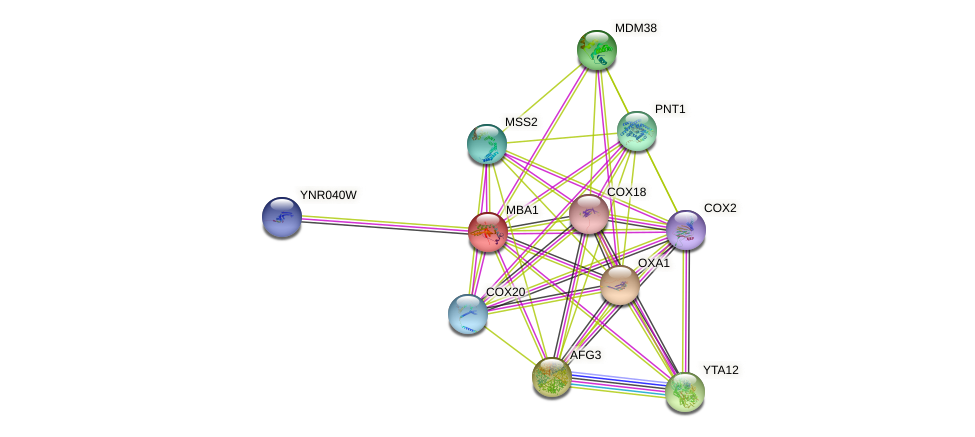 MBA1 protein (Saccharomyces cerevisiae) - STRING interaction network