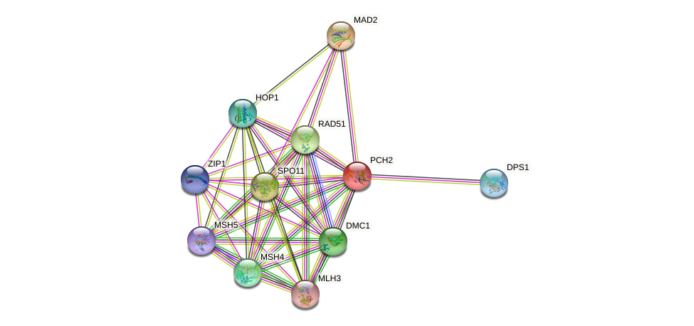 PCH2 protein (Saccharomyces cerevisiae) - STRING interaction network