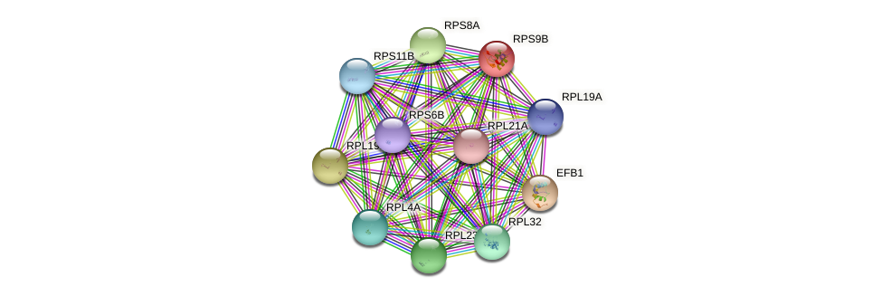 RPS9B protein (Saccharomyces cerevisiae) - STRING interaction network