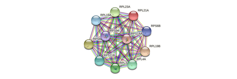 RPL21A protein (Saccharomyces cerevisiae) - STRING interaction network
