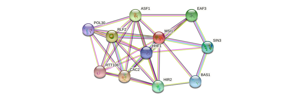 MSI1 protein (Saccharomyces cerevisiae) - STRING interaction network