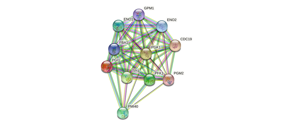 PGI1 protein (Saccharomyces cerevisiae) - STRING interaction network