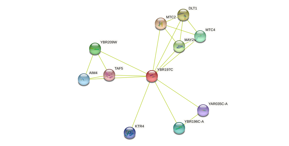 YBR197C protein (Saccharomyces cerevisiae) - STRING interaction network