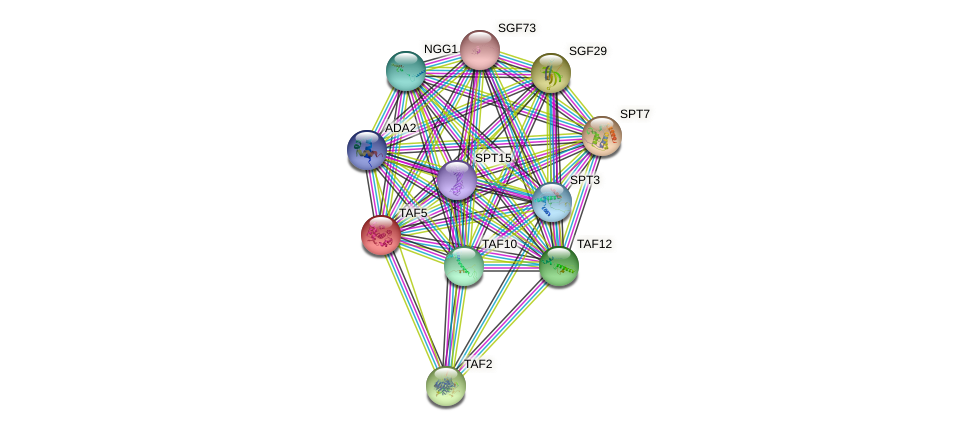TAF5 protein (Saccharomyces cerevisiae) - STRING interaction network