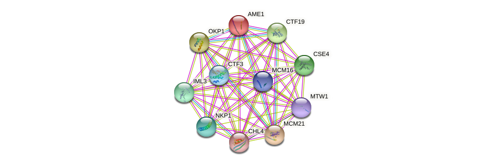 AME1 protein (Saccharomyces cerevisiae) - STRING interaction network