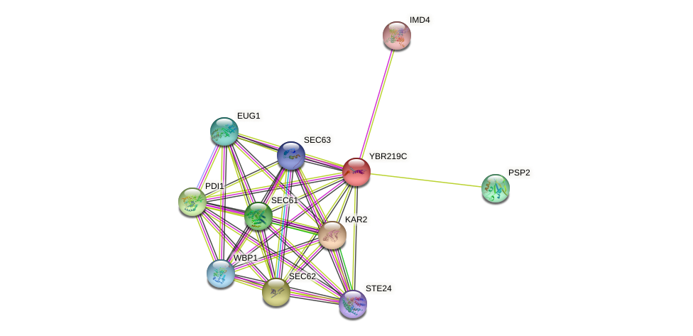YBR219C protein (Saccharomyces cerevisiae) - STRING interaction network