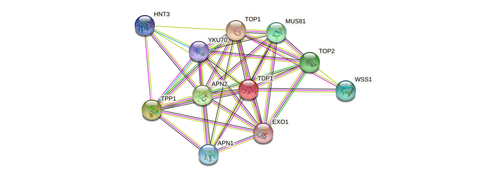 TDP1 protein (Saccharomyces cerevisiae) - STRING interaction network