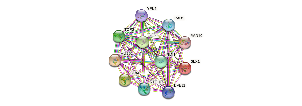 SLX1 protein (Saccharomyces cerevisiae) - STRING interaction network