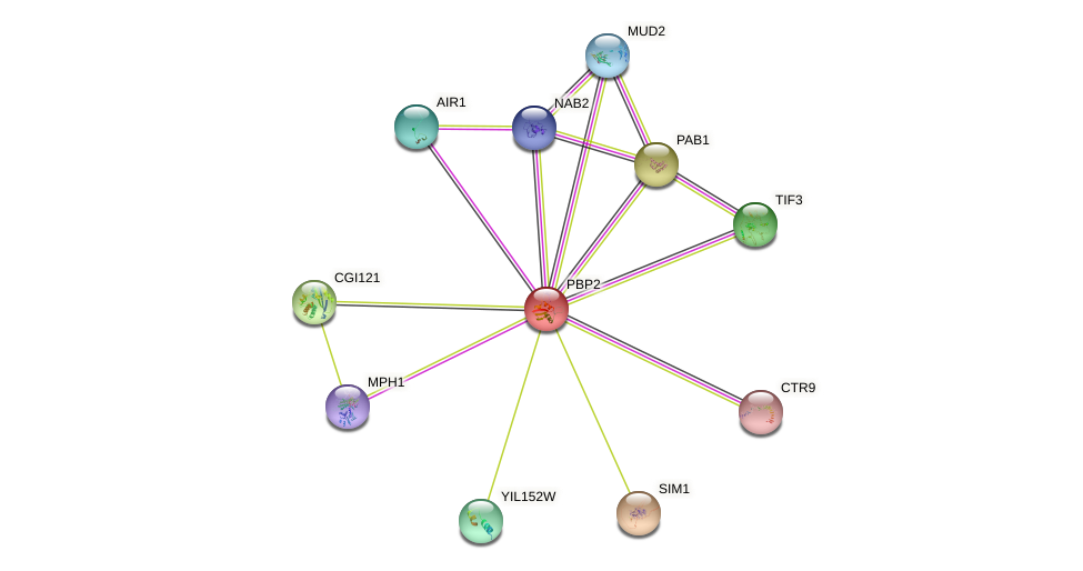 PBP2 protein (Saccharomyces cerevisiae) - STRING interaction network