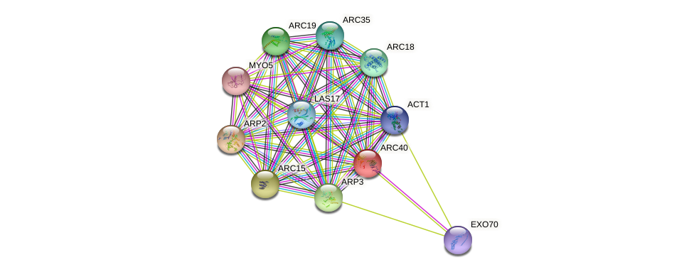 ARC40 protein (Saccharomyces cerevisiae) - STRING interaction network