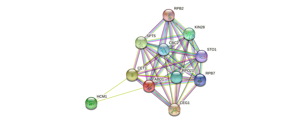 ABD1 protein (Saccharomyces cerevisiae) - STRING interaction network