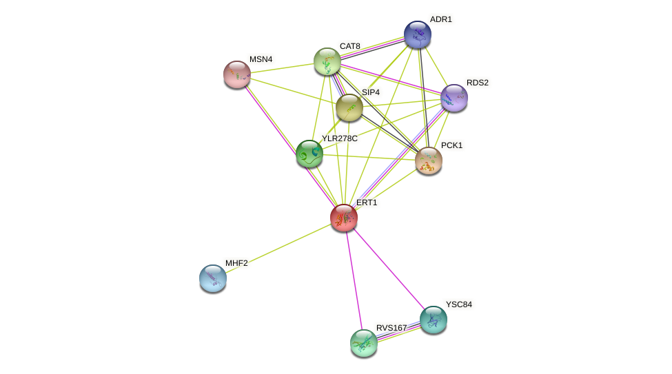 ERT1 protein (Saccharomyces cerevisiae) - STRING interaction network