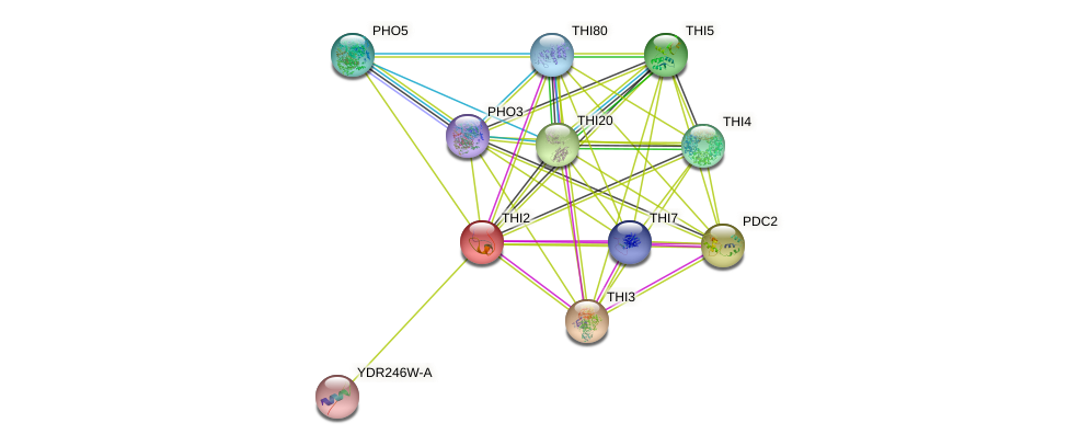THI2 protein (Saccharomyces cerevisiae) - STRING interaction network