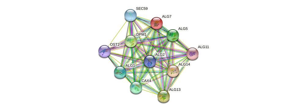 ALG7 protein (Saccharomyces cerevisiae) - STRING interaction network
