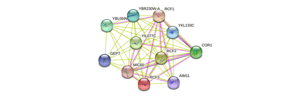 YBR255C-A protein (Saccharomyces cerevisiae) - STRING interaction network