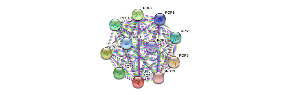 POP4 protein (Saccharomyces cerevisiae) - STRING interaction network