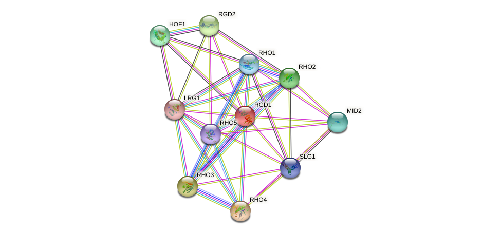 RGD1 protein (Saccharomyces cerevisiae) - STRING interaction network