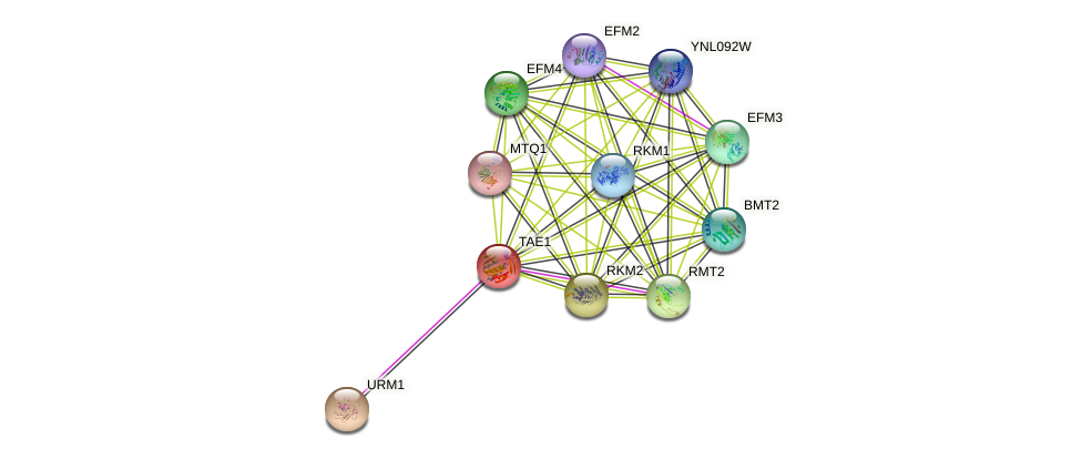 TAE1 protein (Saccharomyces cerevisiae) - STRING interaction network