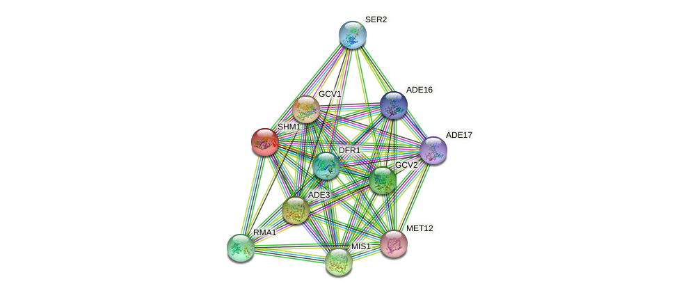 SHM1 protein (Saccharomyces cerevisiae) - STRING interaction network