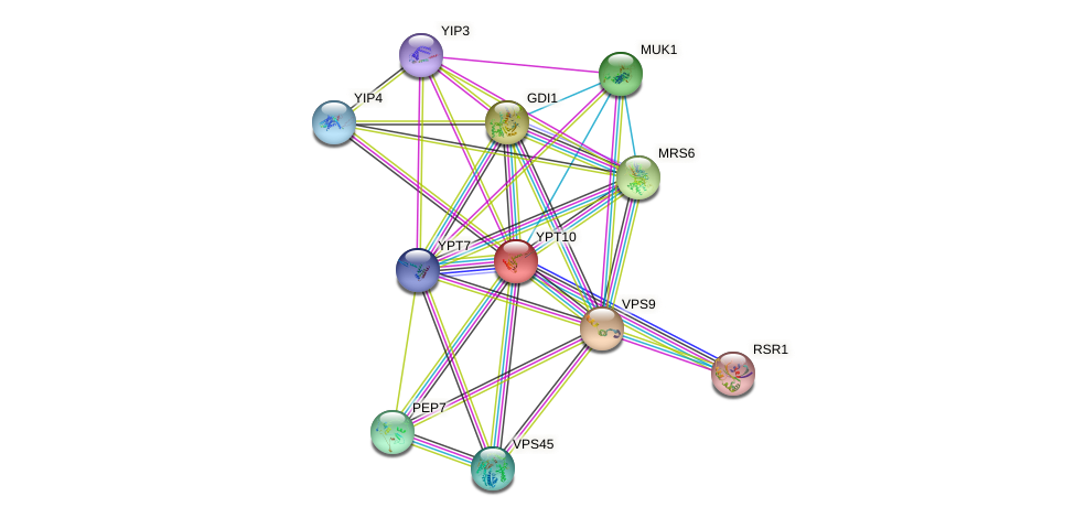 YPT10 protein (Saccharomyces cerevisiae) - STRING interaction network