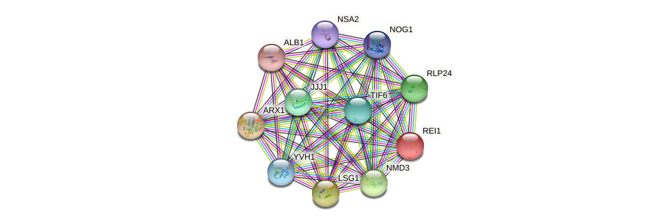 REI1 protein (Saccharomyces cerevisiae) - STRING interaction network