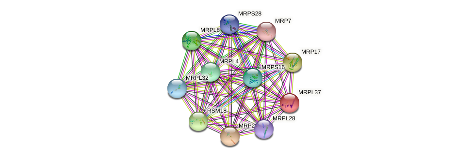 MRPL37 protein (Saccharomyces cerevisiae) - STRING interaction network