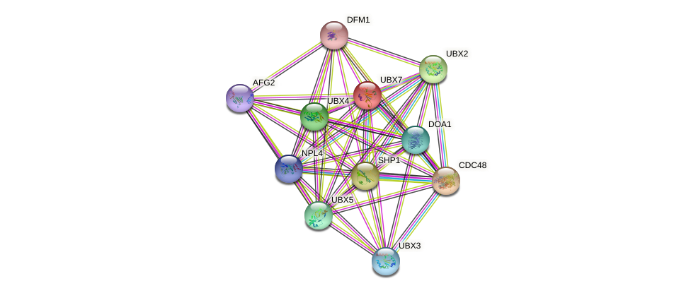 UBX7 protein (Saccharomyces cerevisiae) - STRING interaction network