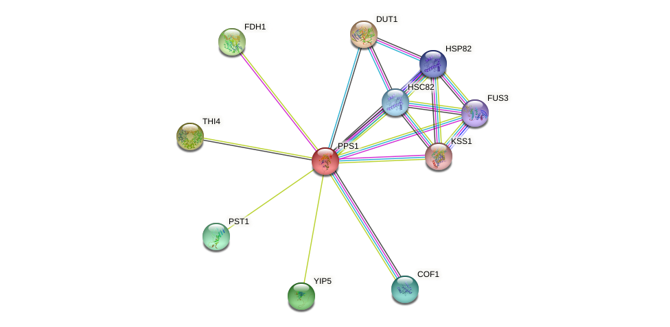PPS1 protein (Saccharomyces cerevisiae) - STRING interaction network