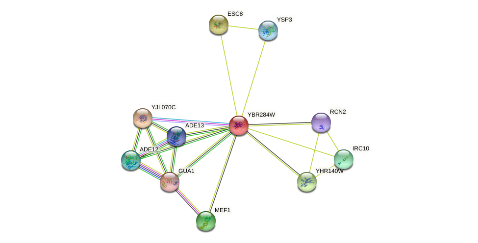 YBR284W protein (Saccharomyces cerevisiae) - STRING interaction network