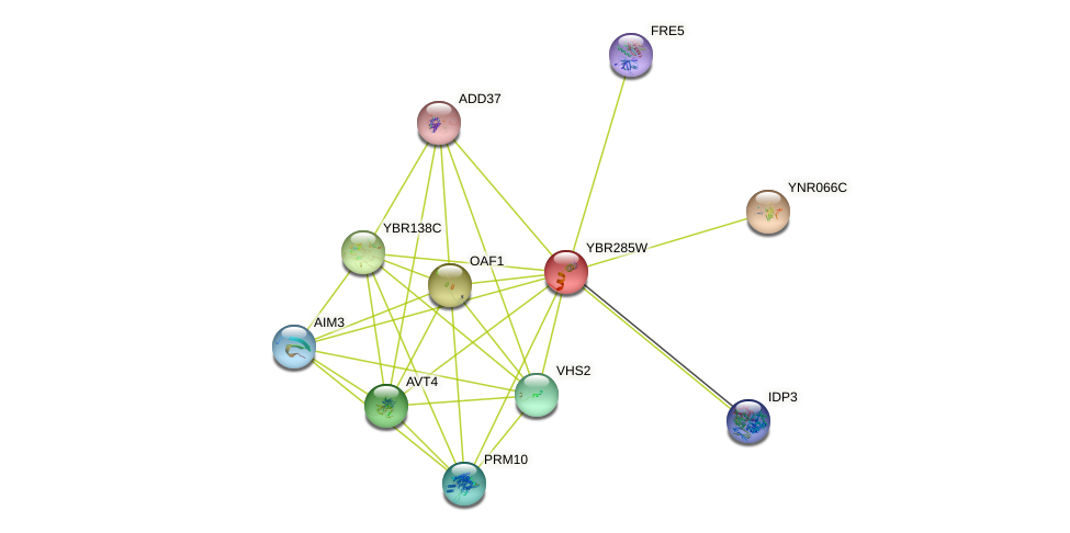 YBR285W protein (Saccharomyces cerevisiae) - STRING interaction network