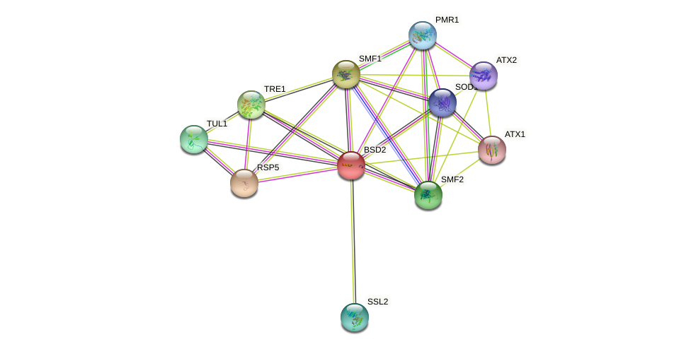 BSD2 protein (Saccharomyces cerevisiae) - STRING interaction network