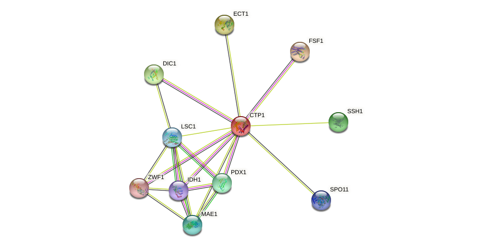 CTP1 protein (Saccharomyces cerevisiae) - STRING interaction network