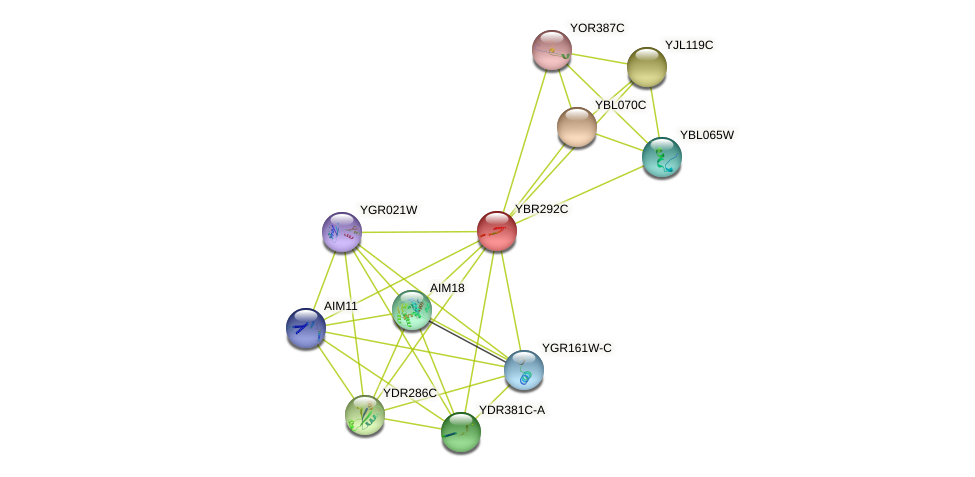 YBR292C protein (Saccharomyces cerevisiae) - STRING interaction network
