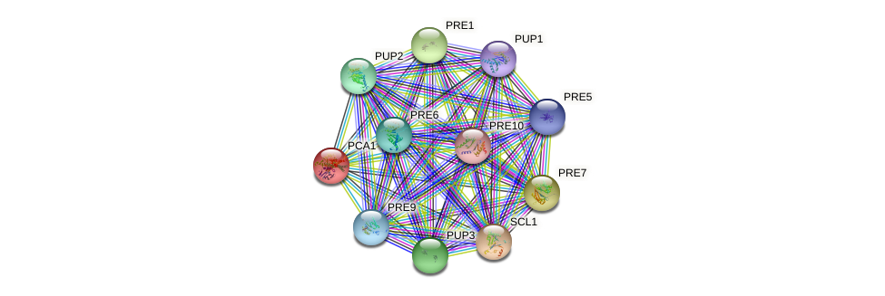PCA1 protein (Saccharomyces cerevisiae) - STRING interaction network