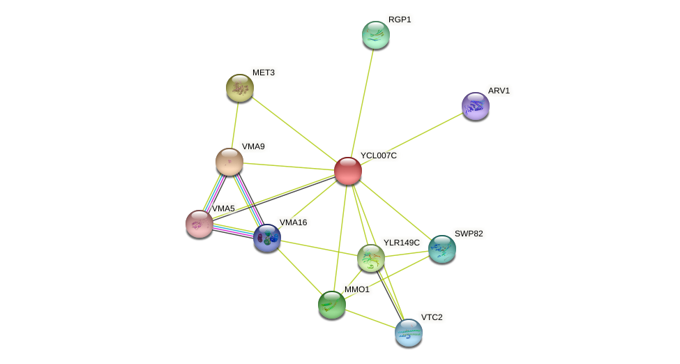 YCL007C protein (Saccharomyces cerevisiae) - STRING interaction network