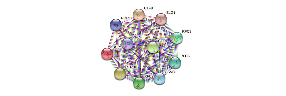 DCC1 protein (Saccharomyces cerevisiae) - STRING interaction network