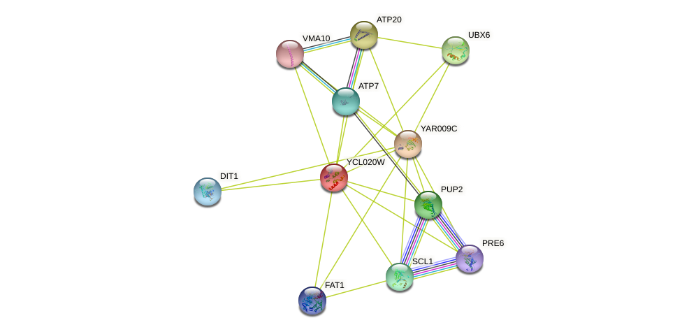 YCL020W protein (Saccharomyces cerevisiae) - STRING interaction network