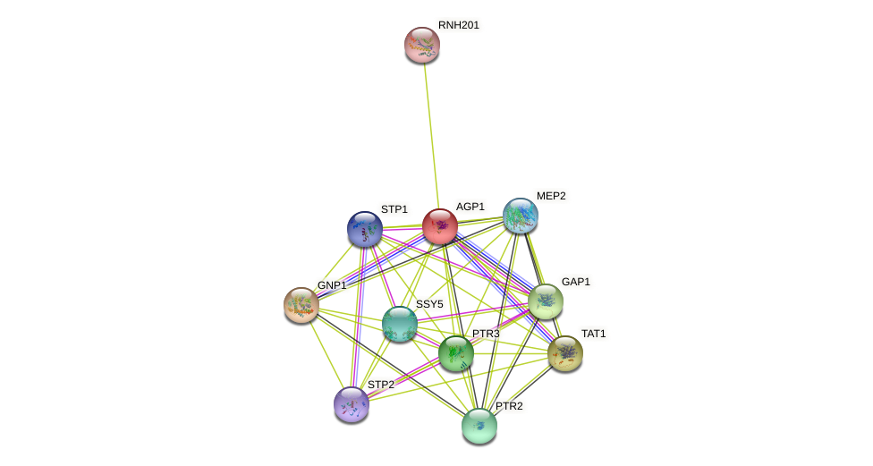 AGP1 protein (Saccharomyces cerevisiae) - STRING interaction network