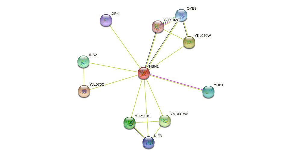 HBN1 protein (Saccharomyces cerevisiae) - STRING interaction network