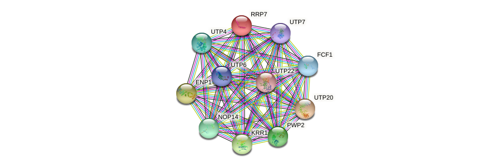 RRP7 protein (Saccharomyces cerevisiae) - STRING interaction network