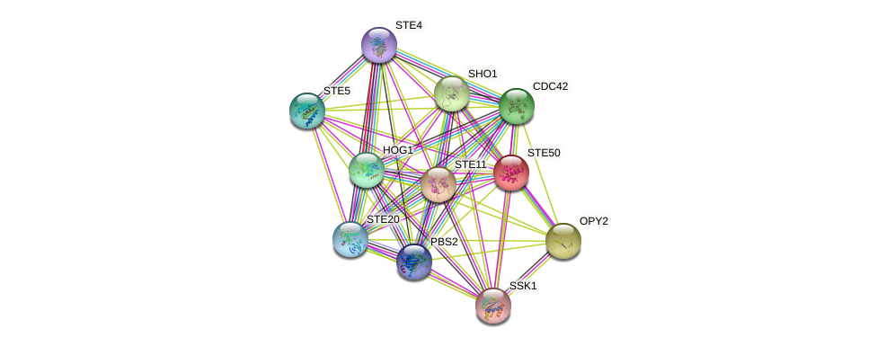 STE50 protein (Saccharomyces cerevisiae) - STRING interaction network