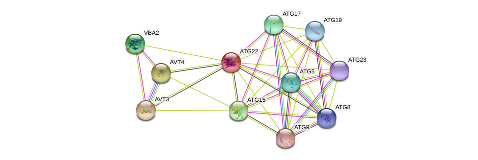 ATG22 protein (Saccharomyces cerevisiae) - STRING interaction network