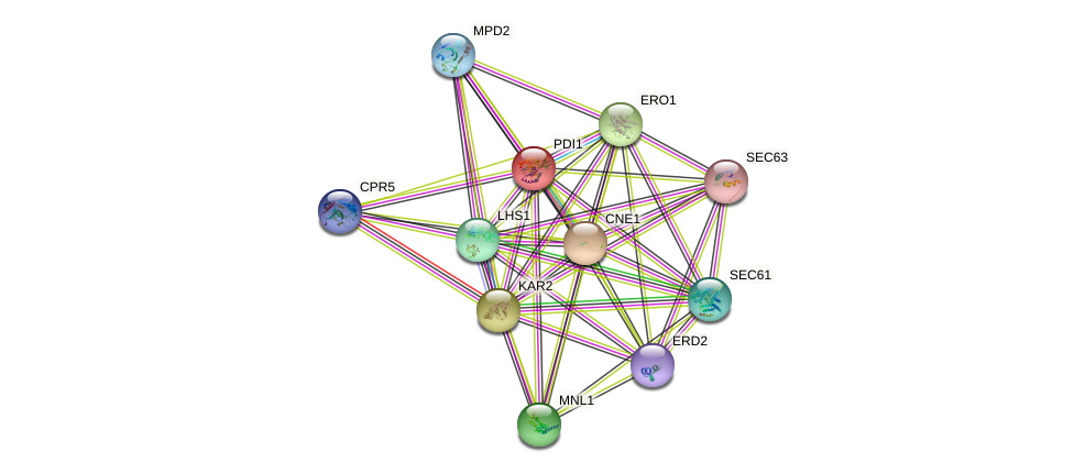 PDI1 protein (Saccharomyces cerevisiae) - STRING interaction network