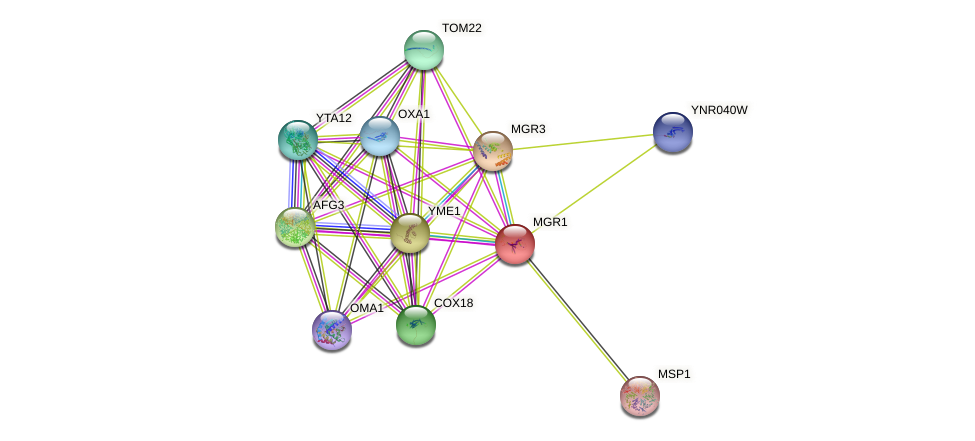 MGR1 protein (Saccharomyces cerevisiae) - STRING interaction network