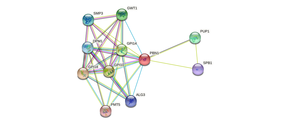 PBN1 protein (Saccharomyces cerevisiae) - STRING interaction network