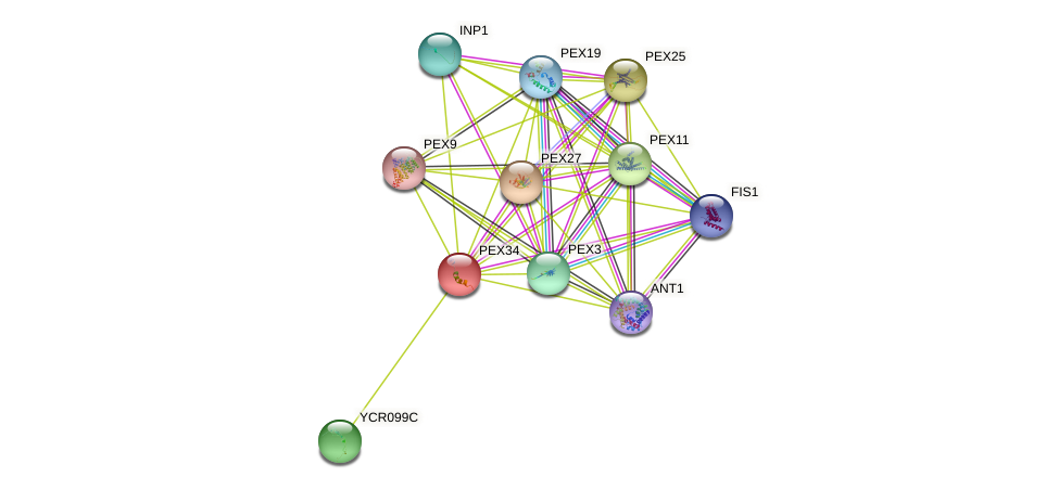 PEX34 protein (Saccharomyces cerevisiae) - STRING interaction network