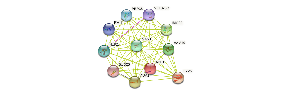 ADF1 protein (Saccharomyces cerevisiae) - STRING interaction network