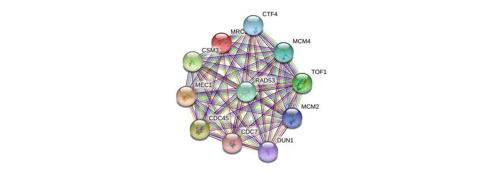 MRC1 protein (Saccharomyces cerevisiae) - STRING interaction network
