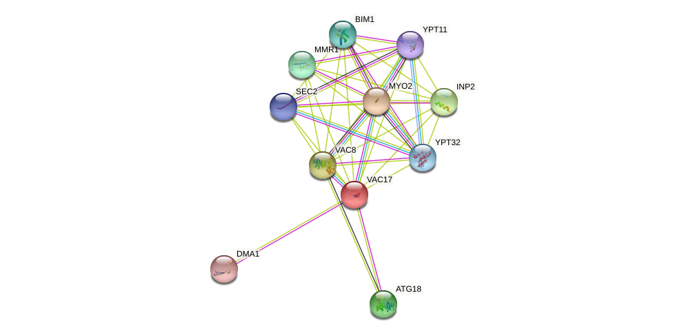 VAC17 protein (Saccharomyces cerevisiae) - STRING interaction network